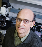David J. Shapiro, a professor of biochemistry at Illinois, led the team that identified several compounds that block the growth of estrogen-dependent breast cancer cells with little or no effect on other cells.