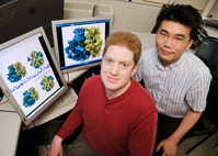 Physics professor Taekjip Ha and postdoctoral fellow Peter Cornish report that they are the first to observe the dynamic, ratchet-like movements of single ribosomal molecules in the act of building proteins from genetic blueprints. In the animation, the small (yellow) and large (blue) subunits of the ribosome ratchet back and forth between the classical (non-rotated) and hybrid (rotated) states during protein translation. These two states were first imaged via cryo-electron microscopy by Joachim Frank at the Wadsworth Center in Albany, NY. The red and green spheres represent fluorescent molecules used in the FRET analysis conducted at Illinois. Animation created by Elizabeth Villa, Leonardo Trabuco and Klaus Schulten, U. of I.