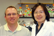 Rodney Johnson, a professor of animal sciences, and graduate student Saebyeol Jang found that a plant flavonoid, luteolin, inhibited a key pathway in the inflammatory response of some brain cells.