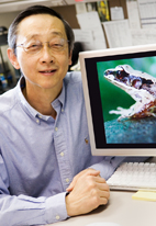 Albert Feng, a professor of molecular and integrative physiology, reported his latest frog-related findings in the journal Nature.