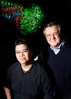 Illinois graduate research assistant Eric Lee (left) and physics professor Klaus Schulten used steered molecular dynamics (SMD) to model the behavior of every atom of the fibrinogen molecule as it was stretched. The computation involved over a million atoms, and required six months to complete.