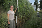 Emily A. Heaton, a doctoral student of Stephen P. Long, a professor of crop sciences and of plant biology, stands next to one of three Miscanthus plots at the intersection of South First Street and Airport Road in Savoy. Giant Miscanthus, a hybrid grass that can grow 13 feet high, drops its slender leaves in the winter, leaving behind tall bamboo-like stems that can be harvested in early spring and burned for fuel.