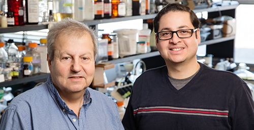 Low doses of the soy isoflavone genistein change estrogen-responsive breast tumor cells to a more aggressive, less treatable form of cancer, suggests new research by Juan Andrade, right, and William Helferich, professors in the department of food science and human nutrition.  Click photo to enlarge