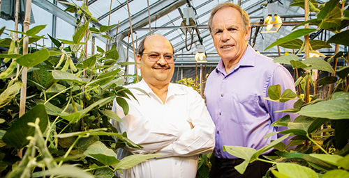 Professors Praveen Kumar, left, and Stephen P. Long have developed a computer modeling system to help plant scientists breed soybean crops that produce more and use less water.  Click photo to enlarge