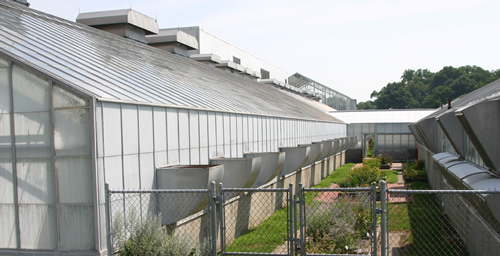 The exterior of a UI greenhouse equipped with energy shade curtains.