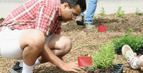 Suhail Barot, a graduate student in electrical and computer engineering and chair of the Student Sustainability Committee, removes a prairie grass seedling from a flat in preparation for planting. The committee funded the purchase of the seedlings for the installation of a sustainable prairie garden at the Veterinary Medicine Basic Sciences Building. On June 6, volunteers from campus and the community planted the seedlings, which will provide a habitat for native insect and vertebrate species and a teaching tool on prairie flora.