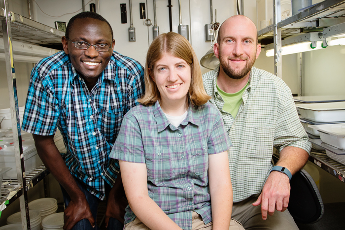 Researchers, from left, Ephantus Muturi, Allison Gardner and Brian Allan found that different types of leaf litter in water had different effects on the abundance of Culex pipiens mosquitoes, which can carry West Nile virus.