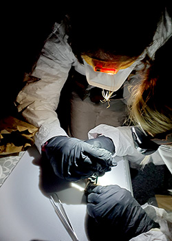 Researchers take a tissue sample. Description in the text.