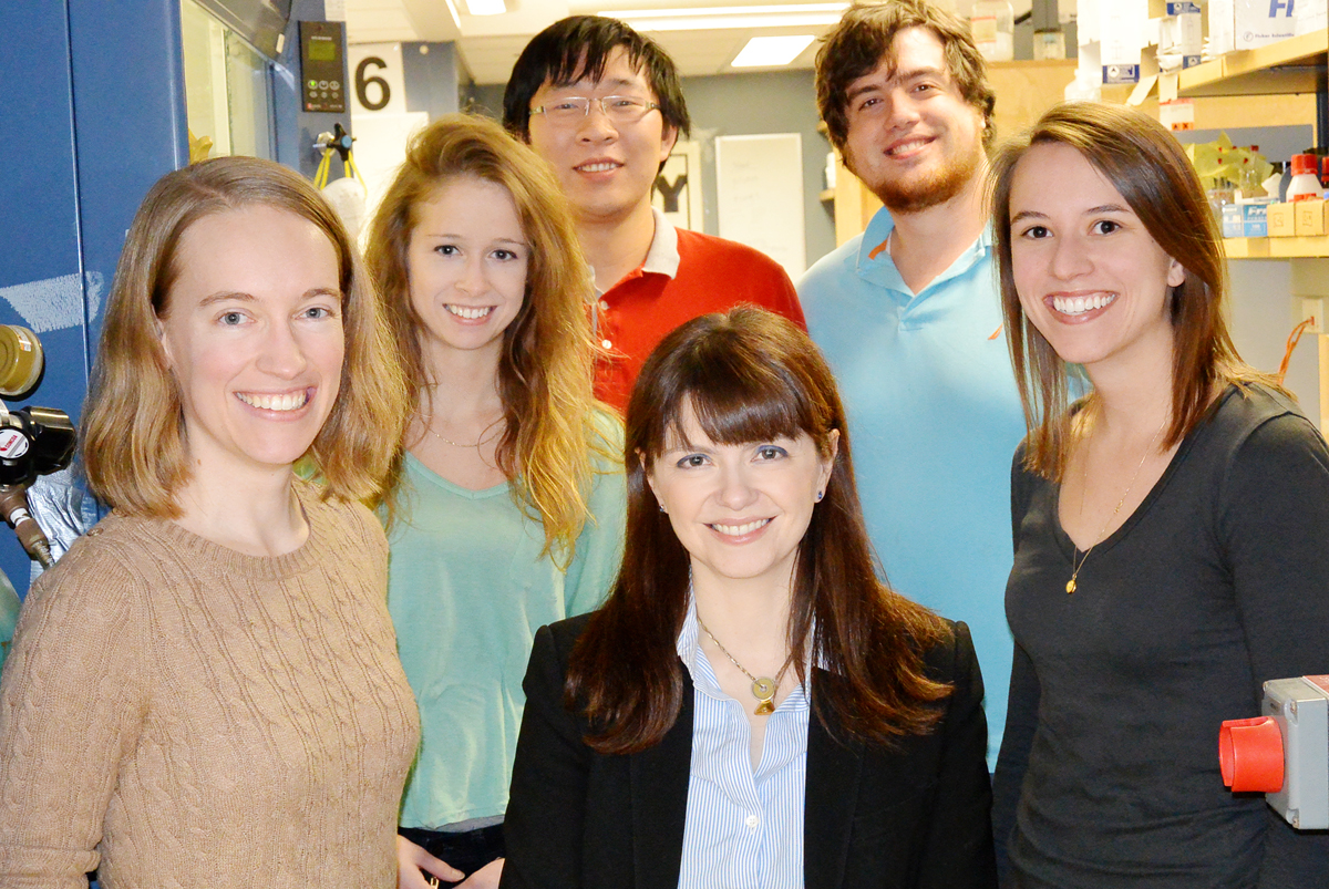 University of Illinois chemists led by professor Christina White (center) developed a new catalyst based on the metal manganese that is both highly reactive and highly selective, traits previously thought to be inversive. Graduate students, from left: Shauna Paradine, Shannon Miller, Jinpeng Zhao, Aaron Petronico and Jennifer Griffin.