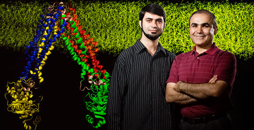 Postdoctoral researcher Mahmoud Moradi, left, and biochemistry professor Emad Tajkhorshid discovered how a transporter protein changes its shape to shuttle other molecules across the cell membrane.