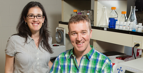 U. of I. chemical and biomolecular engineering professor Brendan Harley, right, and postdoctoral researcher Sara Pedron found a way to adjust the malignancy of brain cancer cells in a newly developed polymer gel that mimics conditions in the brain.