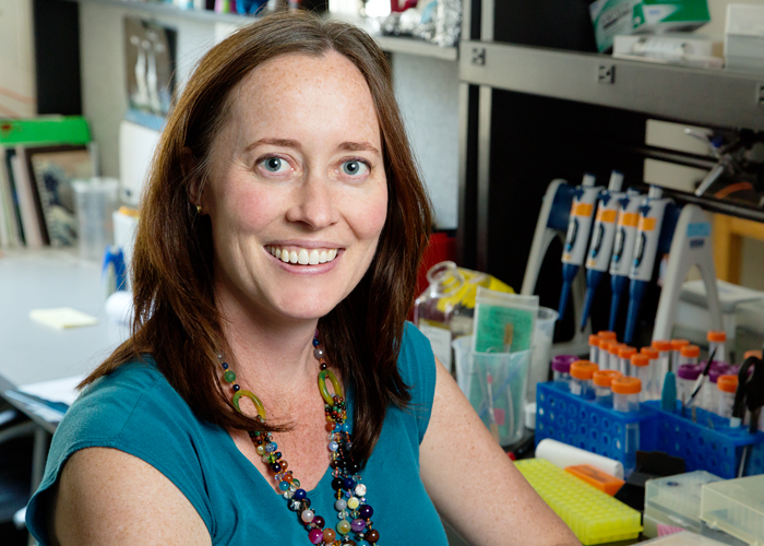University of Illinois animal biology professor Alison Bell and her colleagues tracked changes in the activity of hundreds of genes in the brains of stickleback fish in response to a territorial threat.