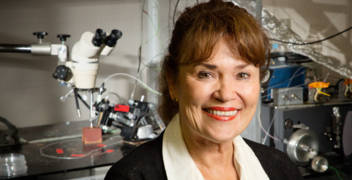 Cell and developmental biology professor Martha Gillette and her colleagues at Illinois discovered that metabolism influences time-keeping in the brain.