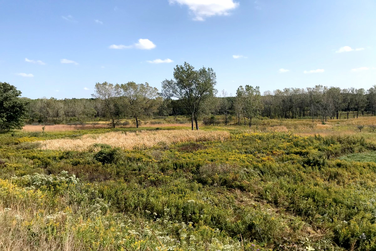 Scene of wetland with low-growing vegetation and flowers in the foreground, yellowing grasses beyoond that and a line of immature trees in the distance.