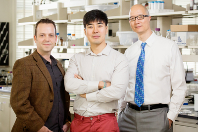 Illinois researchers found that the shape of a tumor may play a role in how cancer cells become primed to spread. From left: materials science and engineering professor Kristopher Kilian, graduate student Junmin Lee and veterinary medicine professor Timothy Fan.