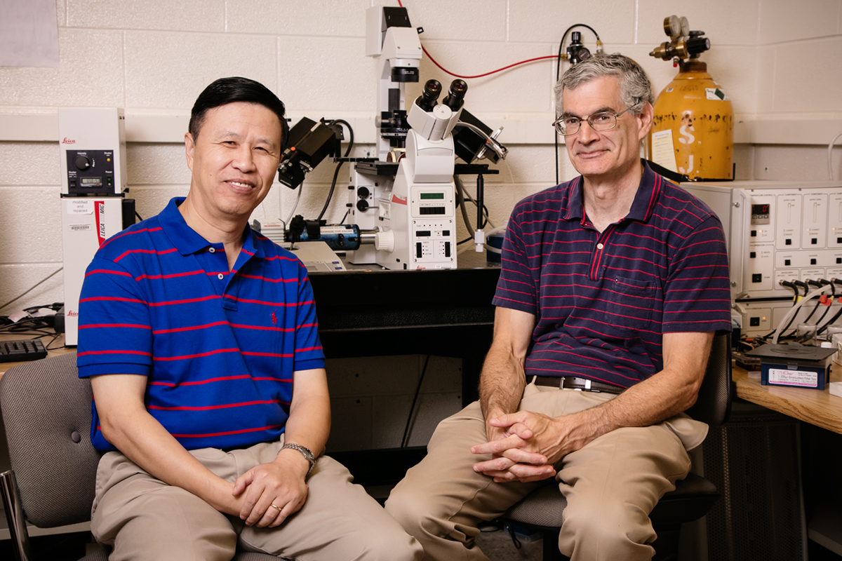 Professors Ning Wang and Andrew Belmont led a team that found the pathway by which physical forces drive gene expression in cells.