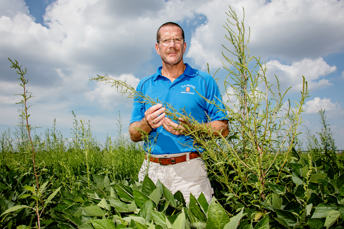 Crop sciences professor Aaron Hager examines herbicide-resistant waterhemp.