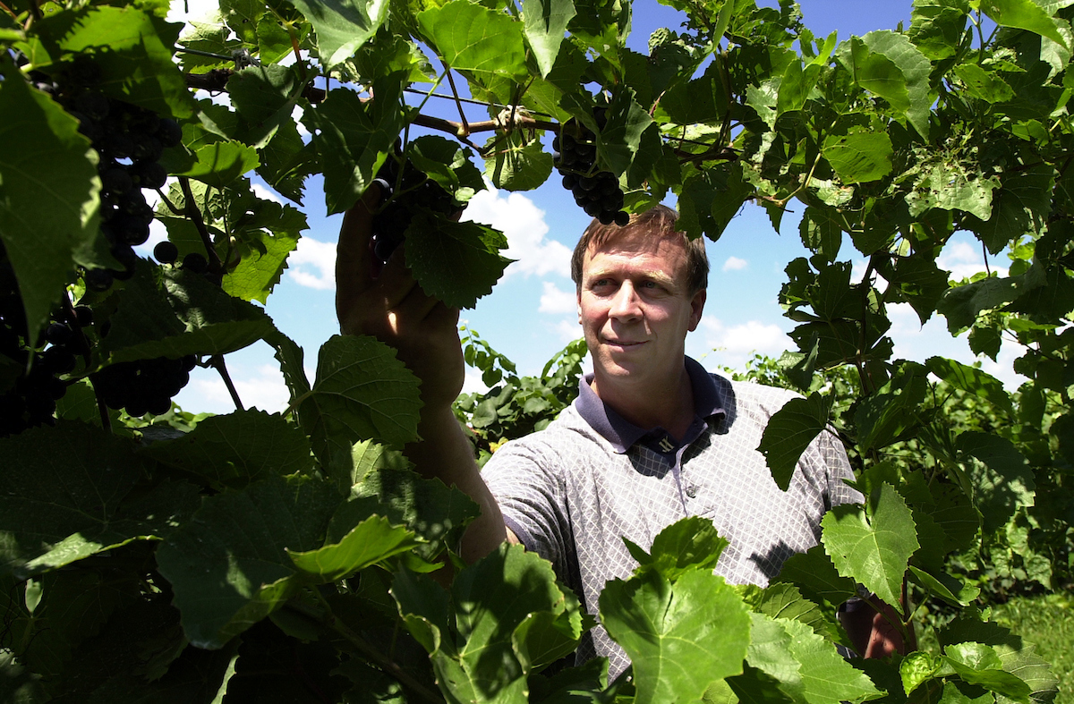 Stephen Menke is an enology specialist in the food science department and the state enologist for the Illinois Grape and Wine Resource Council. Enology is the study of wines and winemaking. plants and fields.