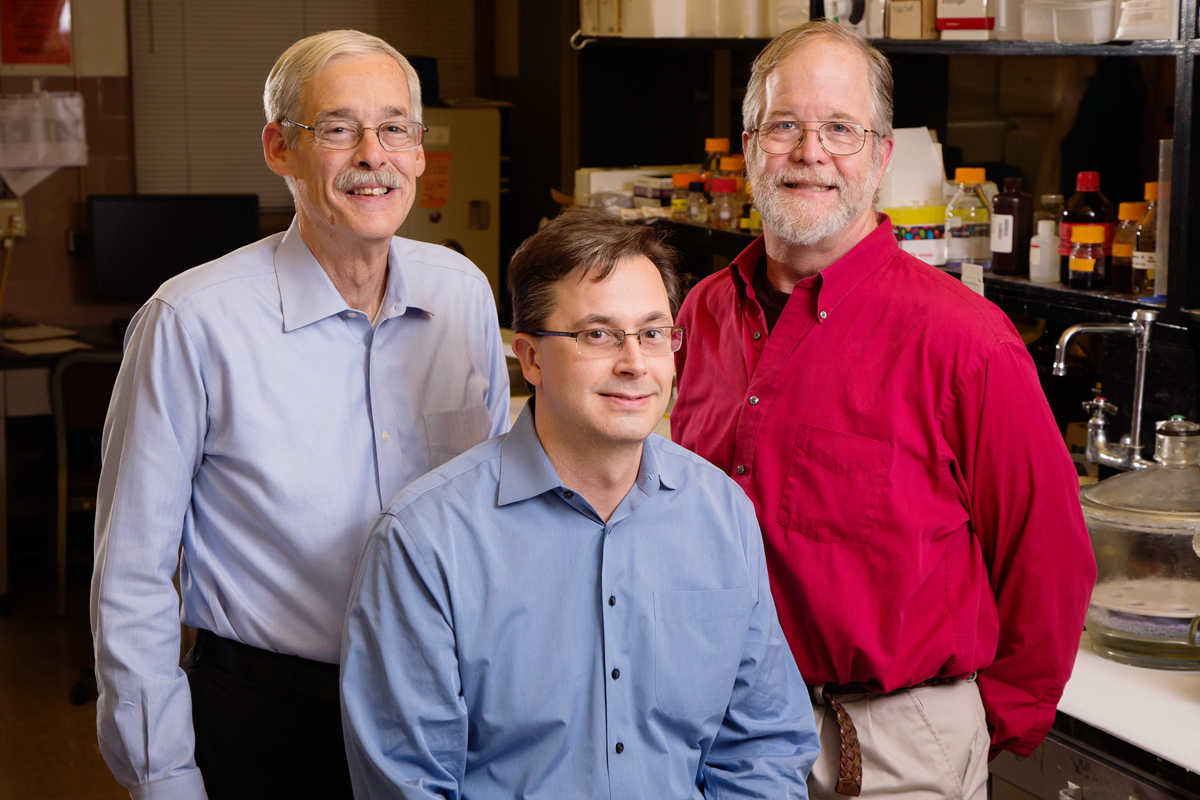 An enzyme that metabolizes beta carotene may play a vital role in testosterone metabolism as well, according to a new study led by researchers at the University of Illinois. From left to right, professor emeritus of food science and nutrition John W. Erdman Jr., molecular and integrative physiology professor Eric C. Bolton and professor emeritus of comparative pathology Matthew A. Wallig. Additional co-authors: Illinois alumni Joshua W. Smith and Nikki A. Ford, and Steven K. Clinton, Nancy E. Moran and Jennifer M. Thomas-Ahner, all of Ohio State University.