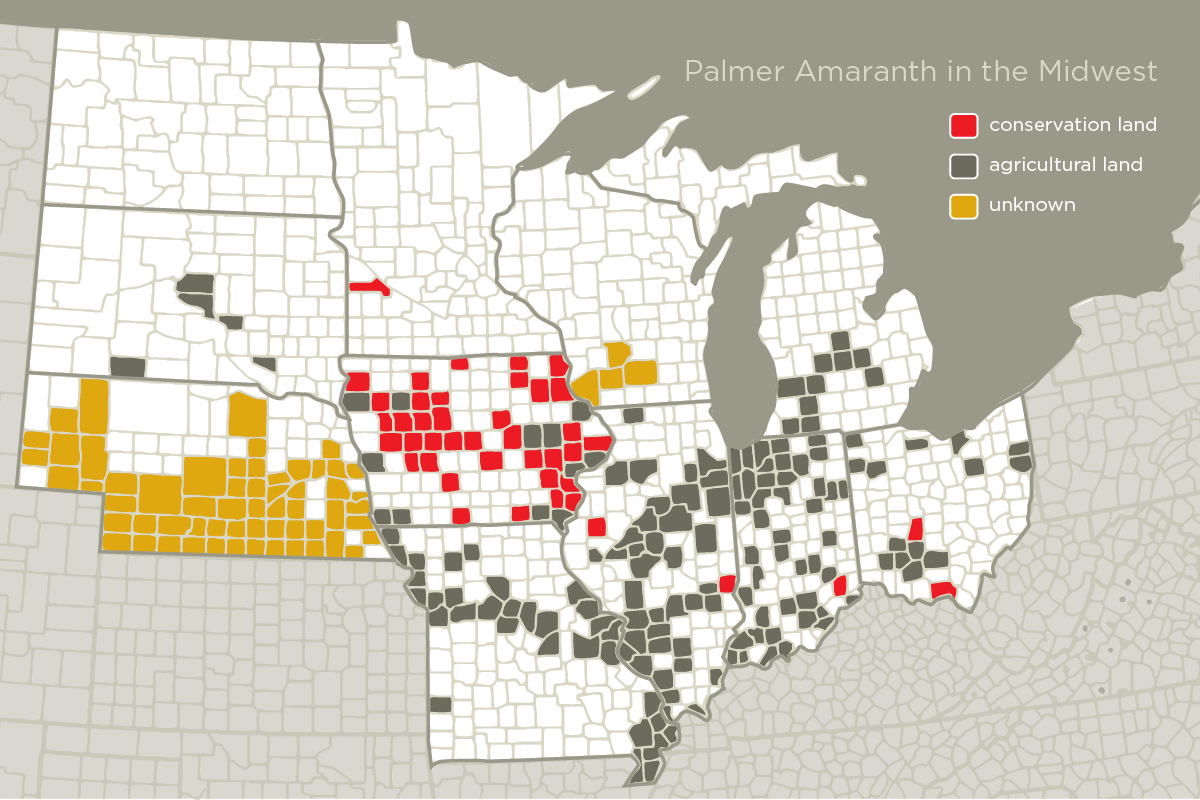 Weed Scientists Are Finding Palmer Amaranth Across The Midwest Counties In Black Indicate Palmer Amaranth Was First Found In An Agricultural Field
