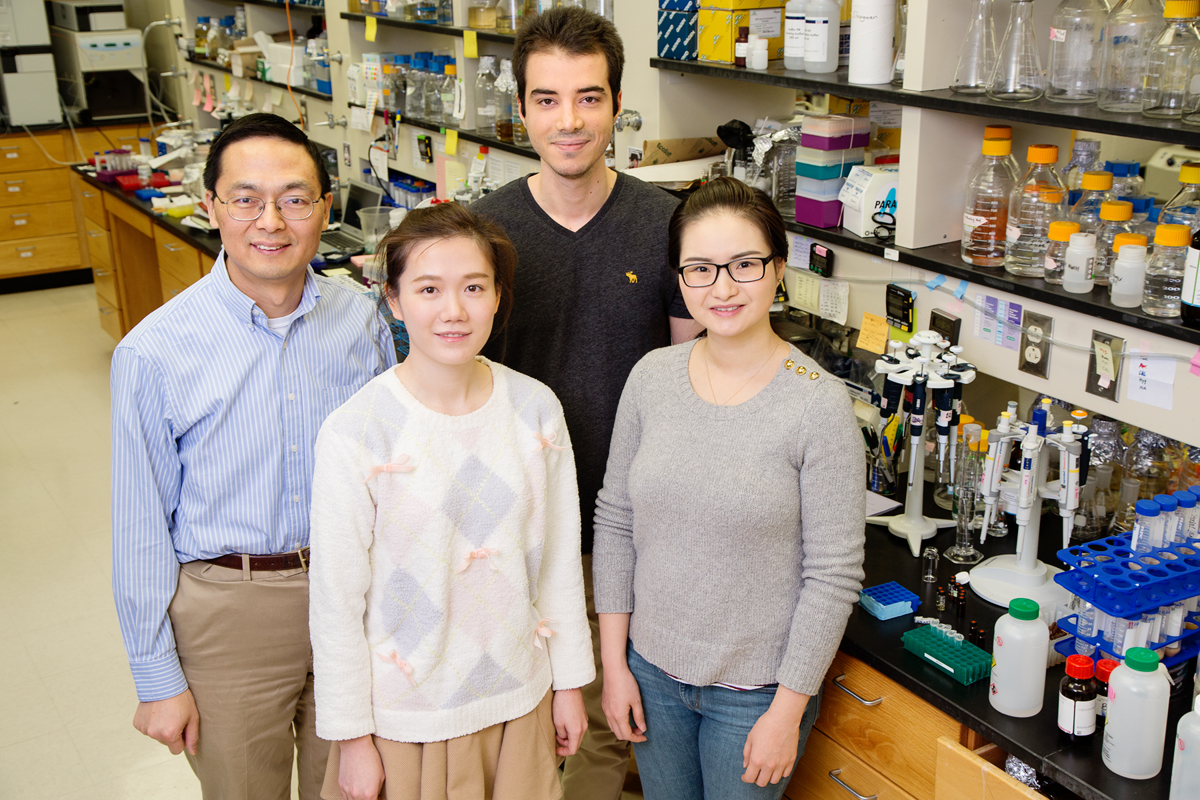Illinois researchers used CRISPR technology to activate silent gene clusters in Streptomyces bacteria, a potential treasure trove of new classes of drugs. Pictured, clockwise from back middle: graduate student Behnam Enghiad, postdoctoral researcher Shangwen Luo, graduate student Tajie Luo and professor Huimin Zhao.