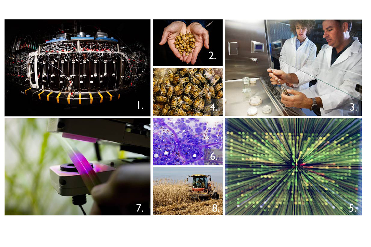 Illinois scientists are making advances in pharmaceutical chemistry (1); tracking invasive species (2) and emerging diseases (3); understanding pollinator biology, behavior and population status (4); exploring genomics (5); developing new imaging techniques (6); improving photosynthesis (7) and developing and harvesting biomass for bioenergy production (8).