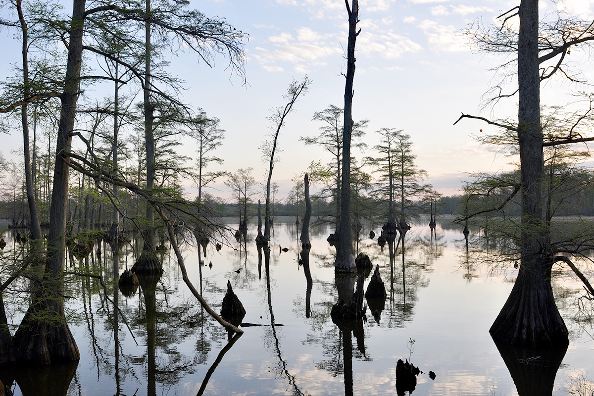 A cypress swamp near Snake Road in the Shawnee National Forest, near Harrisburg, Illinois.