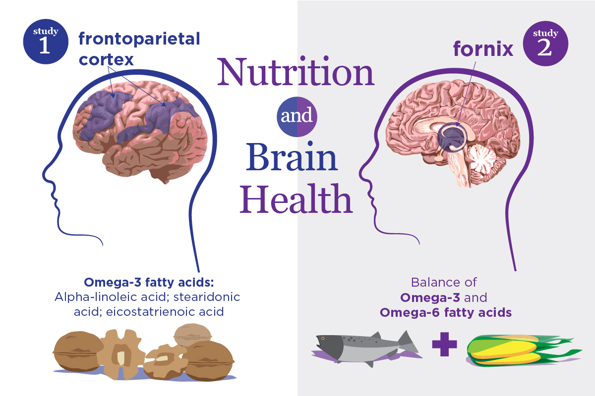 New studies link specific nutrients to the structure and function of brain regions that are particularly sensitive to aging and neurodegenerative disease.