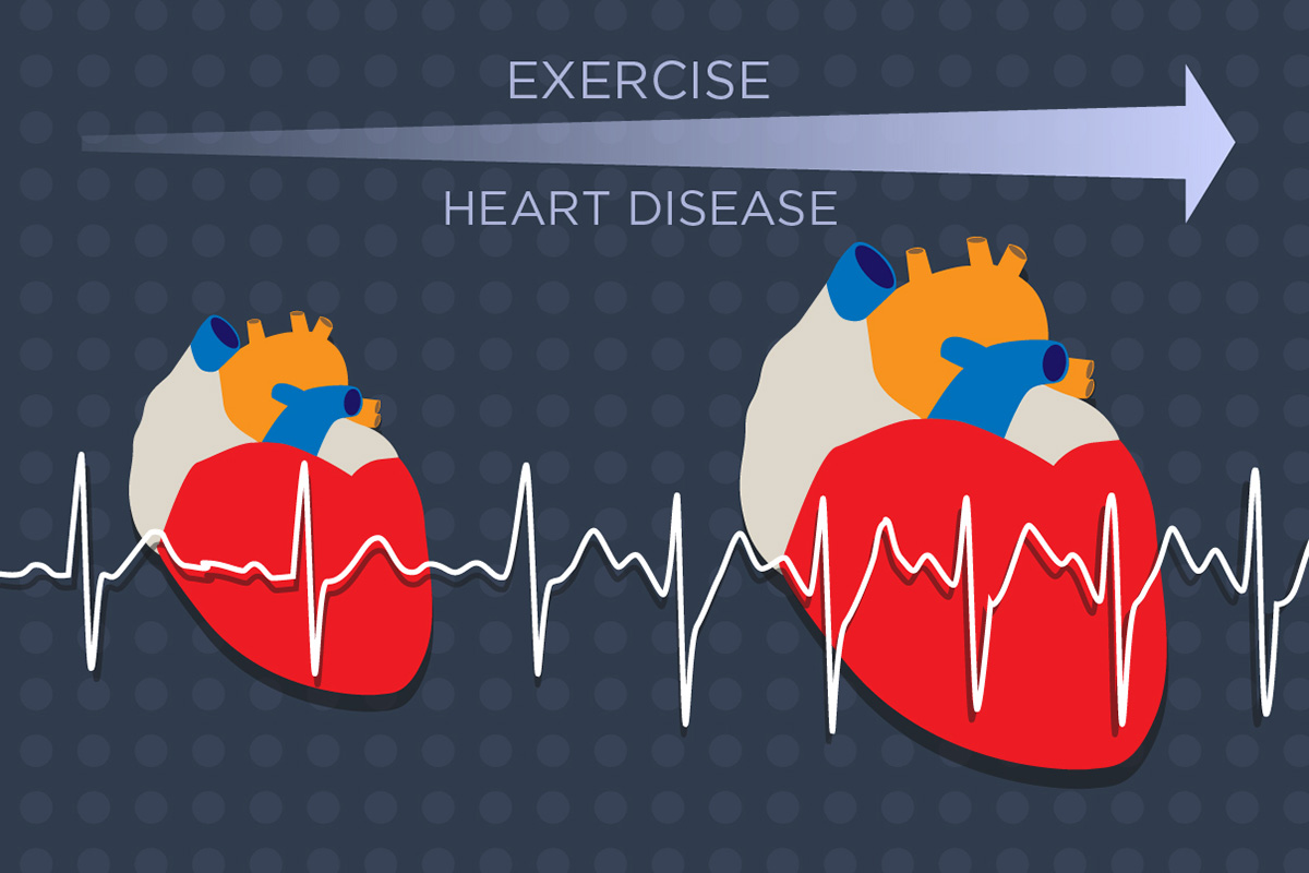 The heart enlarges in response to growing demands from exercise or heart disease. A new study identifies a key molecular player in this process.