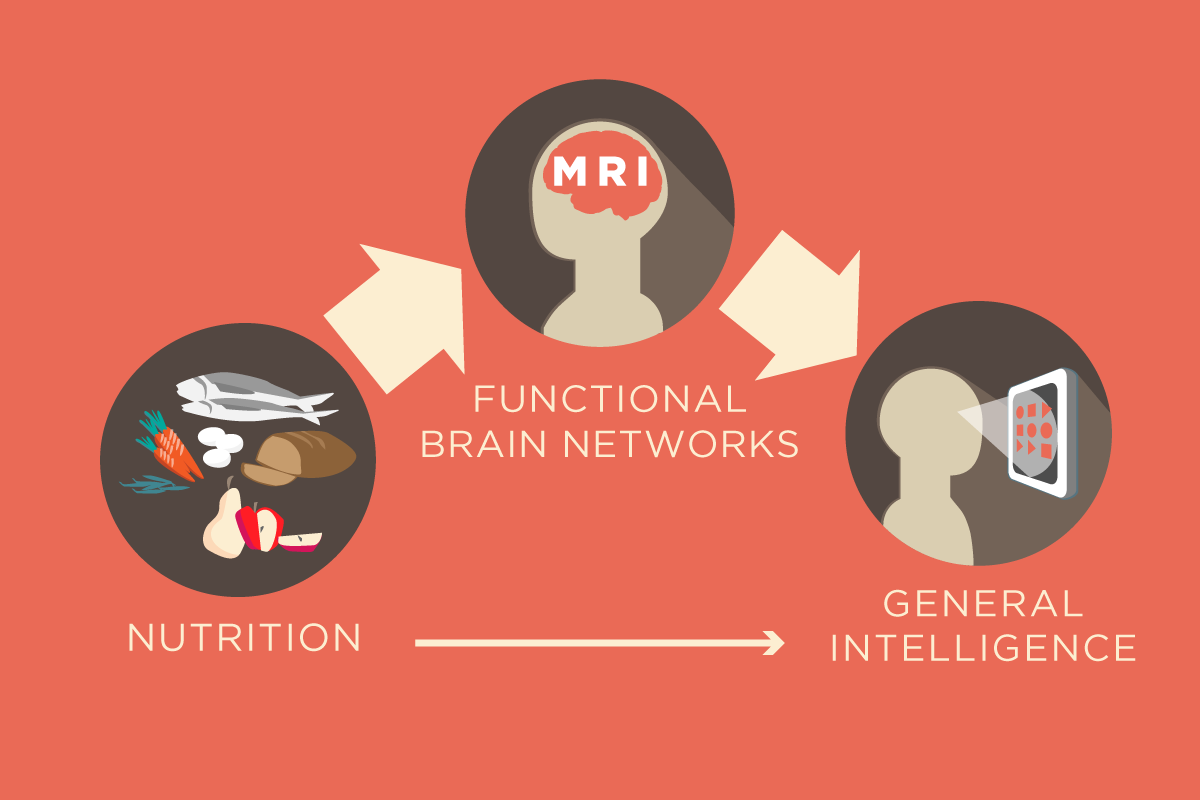 Illinois professor Aron Barbey led a study that found the functional network organization in the brain mediates the relationship between nutrition and intelligence.