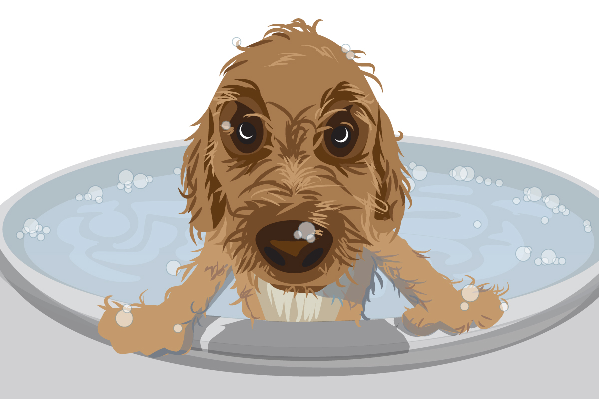 Whirlpool baths were only part of the solution for Peter the goldendoodle.