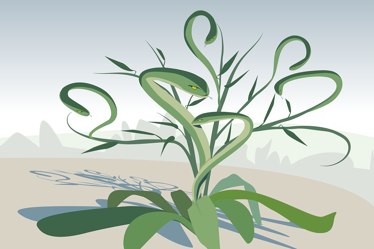 Like a Hydra, some plants grow bigger and boost their chemical defenses after being clipped.