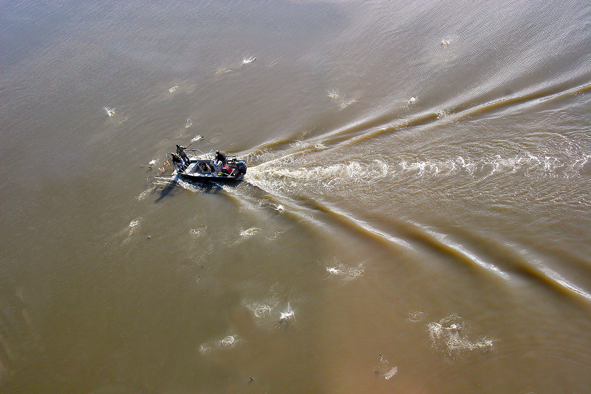 Researchers from the Illinois Natural History Survey have surveyed fish in the Illinois River since 1957. Here, the team uses electricity to stun the fish for capture.