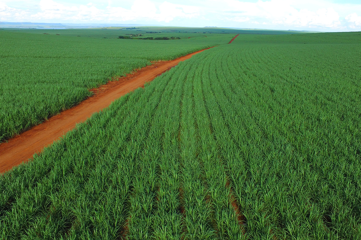 With expansion, the sugarcane-to-ethanol industry in Brazil could reduce global carbon dioxide emissions by as much as 5.6 percent, an international team reports.