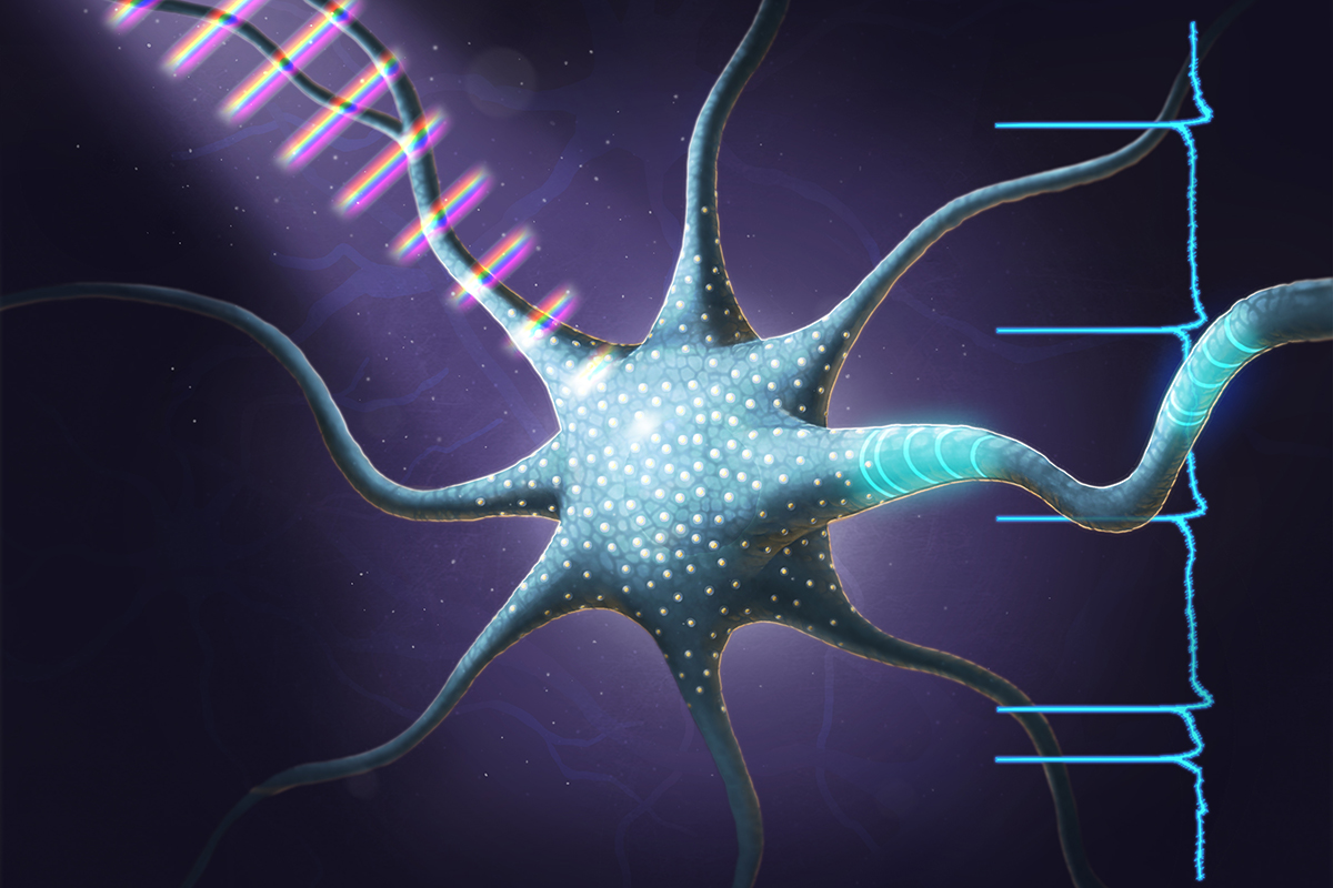 Illinois researchers used ultrafast pulses of tailored light to make neurons fire in different patterns, the first example of coherent control in a living cell.