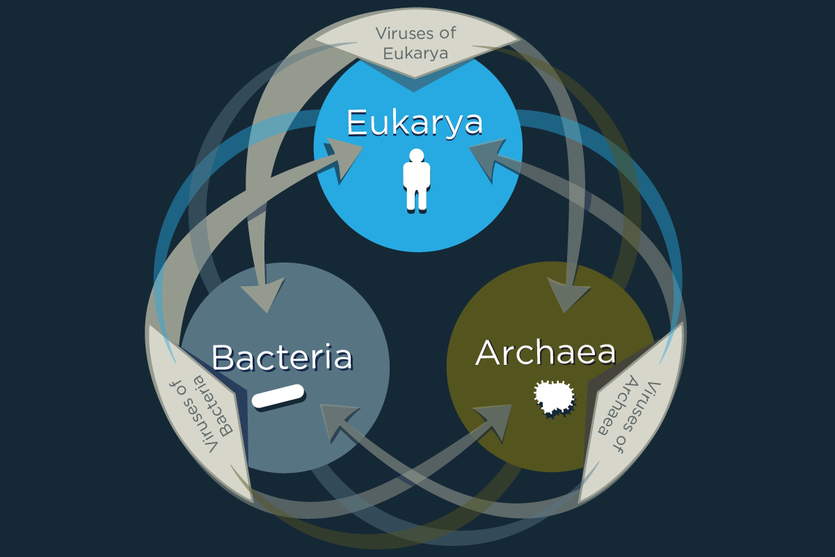 A new study reveals that viruses share genes across the three superkingdoms of life, with most of this unusual sharing occurs between eukarya and bacteria and the viruses that infect them.