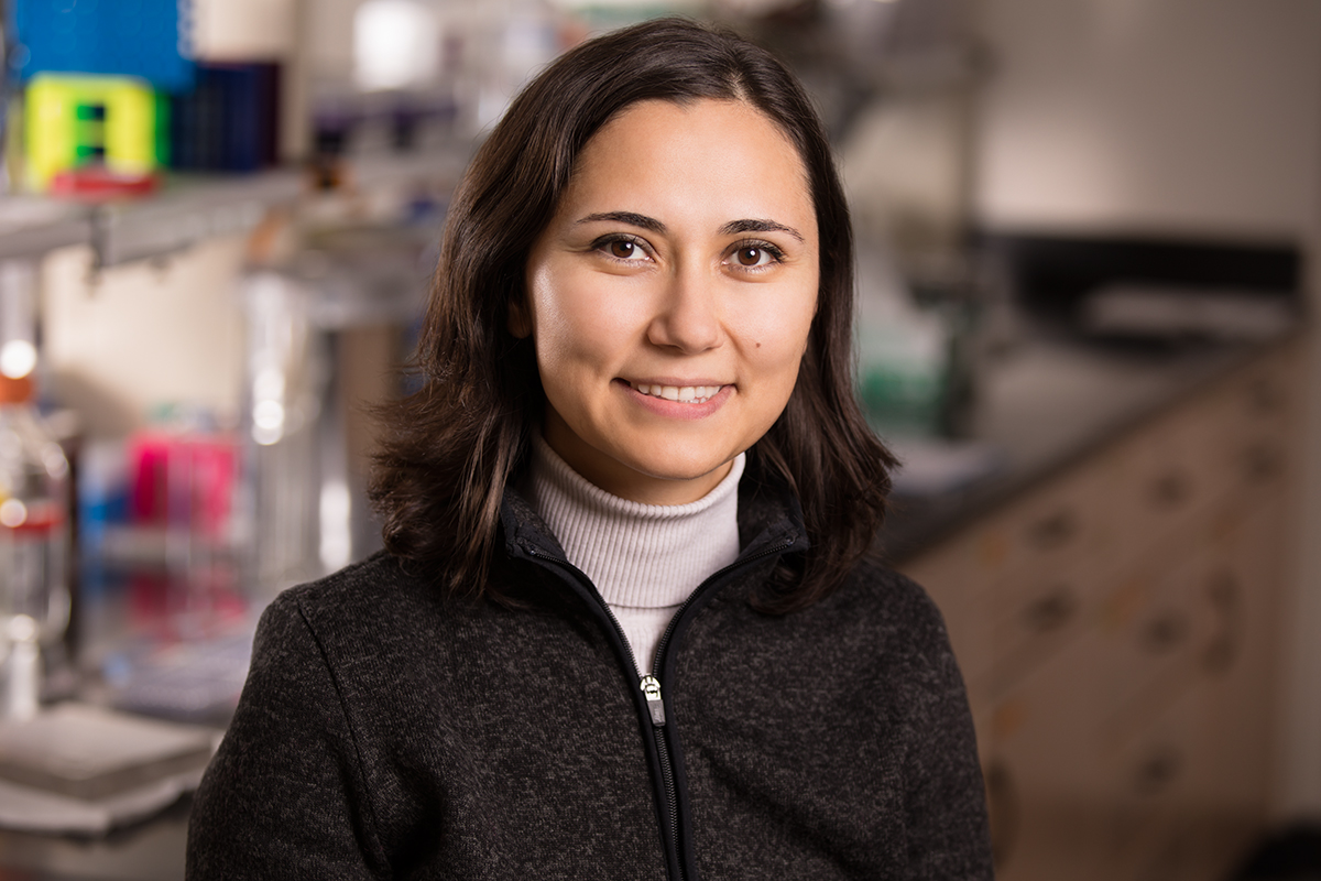 A team led by food science and human nutrition professor Zeynep Madak-Erdogan found that treating ovariectomized mice with a combination of conjugated estrogens and the drug bazedoxifene improved metabolism and prevented the weight gain often associated with low estrogen levels without posing increased risk to their reproductive tissues.