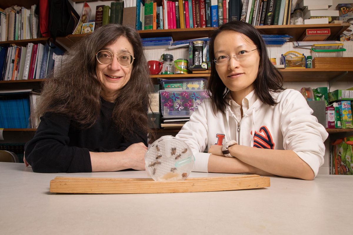 May Berenbaum, left, and Ling-Hsiu Liao found that honey bees have a slight preference for food laced with the fungicide chlorothalonil at certain concentrations.
