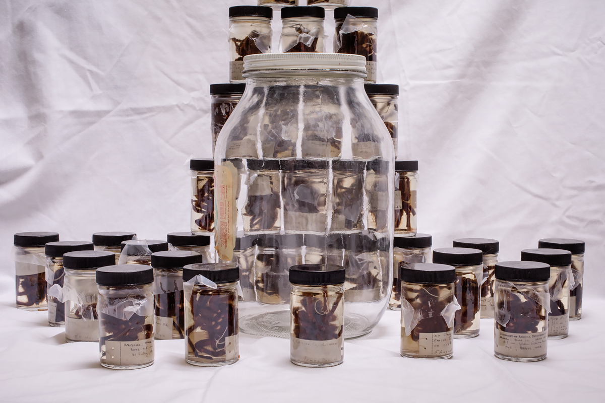 All the tarantulas shown here once shared a single pickle jar. They were meticulously separated and relabeled, and now are in proper storage.