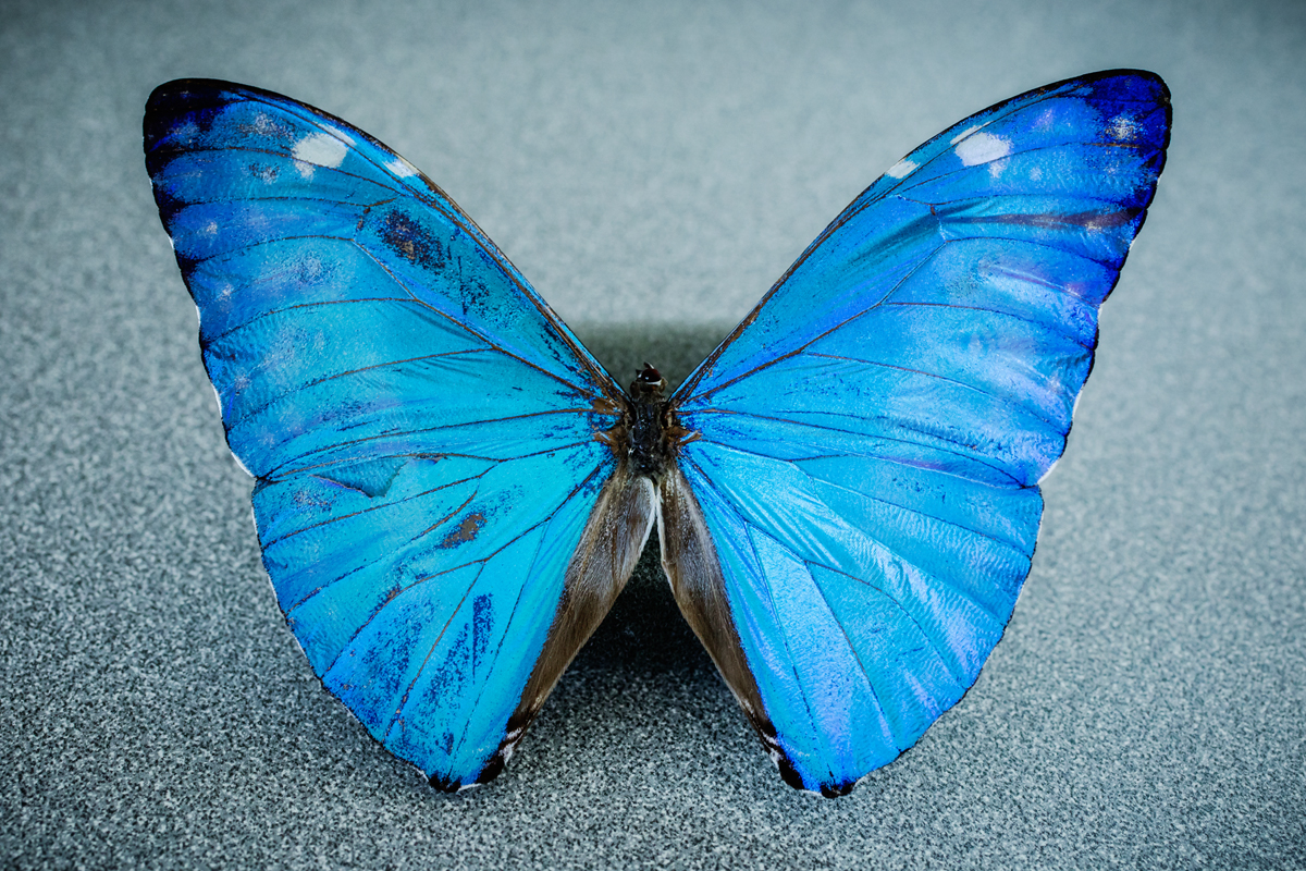 new camera gives surgeons a butterfly s eye view of cancer illinois