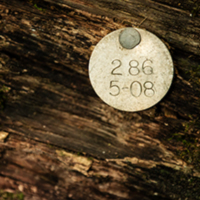 A silver tag is nailed to a fallen tree.