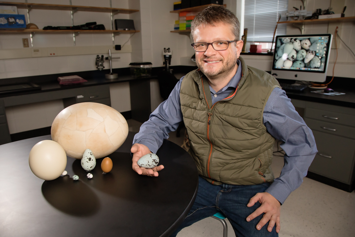Animal biology professor Mark Hauber studies many species of brood parasites, which lay their eggs in the nests of other birds.