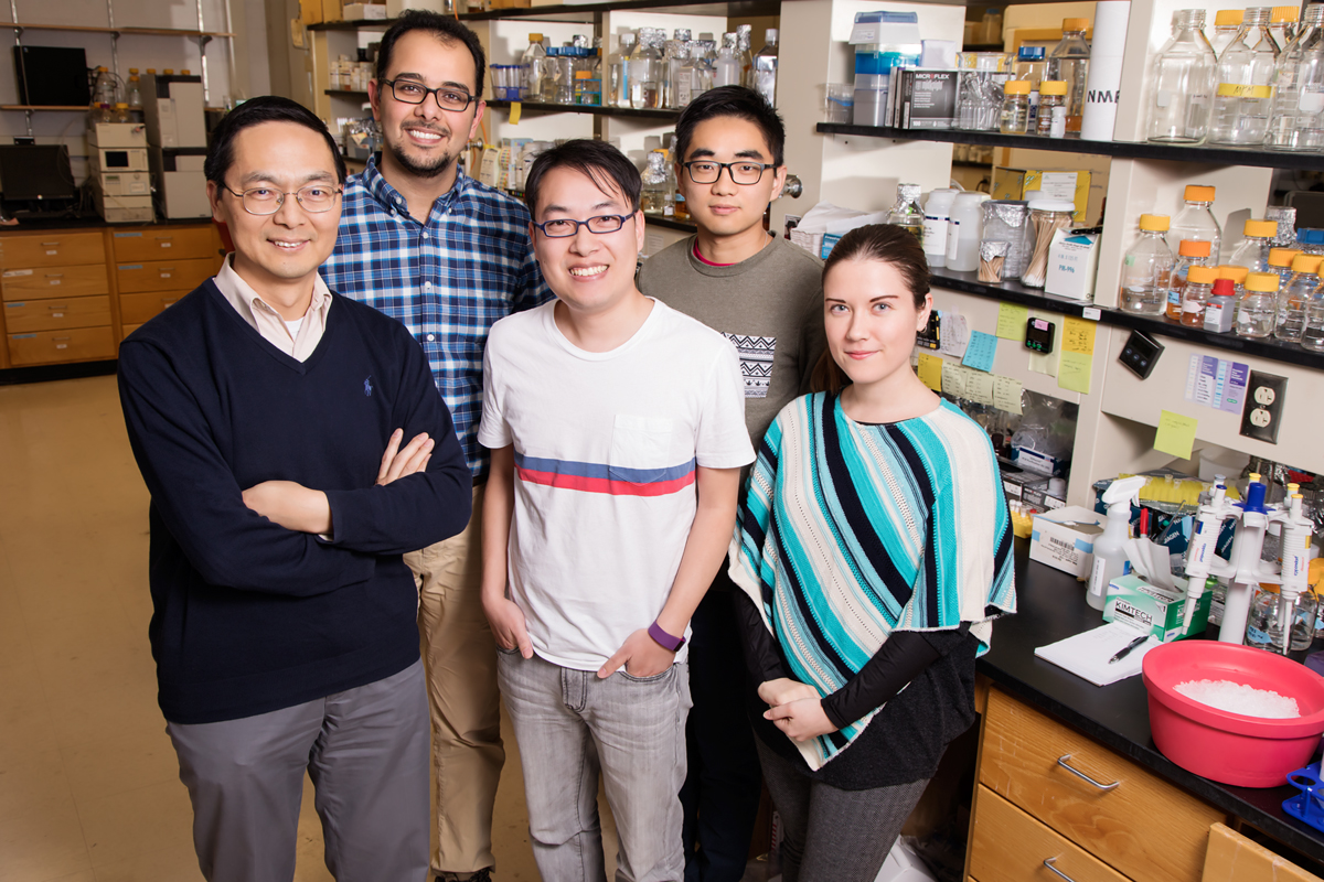 Illinois researchers created a system using CRISPR technology to selectively turn off any gene in Saccharomyces yeast. Pictured, from left: chemical and biomolecular engineering professor Huimin Zhao, graduate students Mohammad Hamedi Rad, Zehua Bao, Pa Xue and Ipek Tasan.