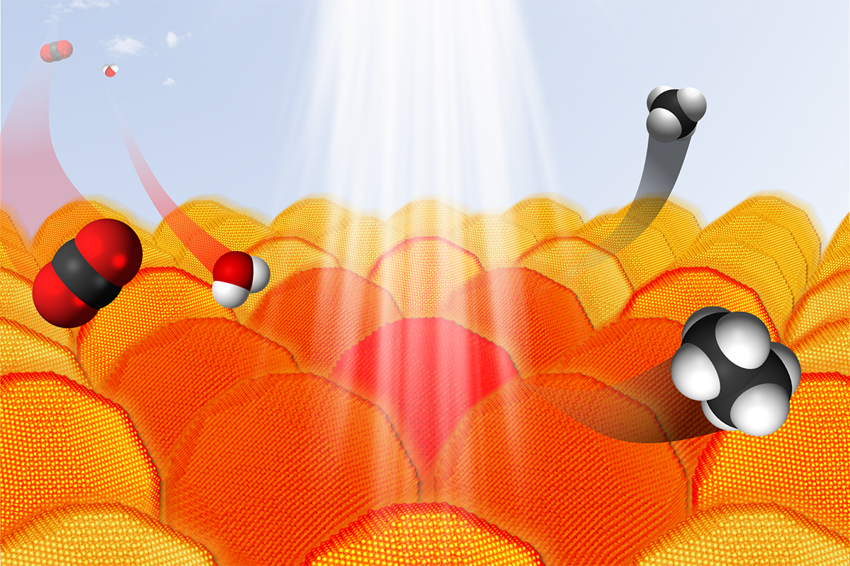 Under the right conditions, gold nanoparticles absorb light and transfer electrons to other reactants. This process can be used to convert CO2 and water into hydrocarbons. In the graphic, carbon atoms are black, oxygen atoms are red and hydrogen atoms are white.
