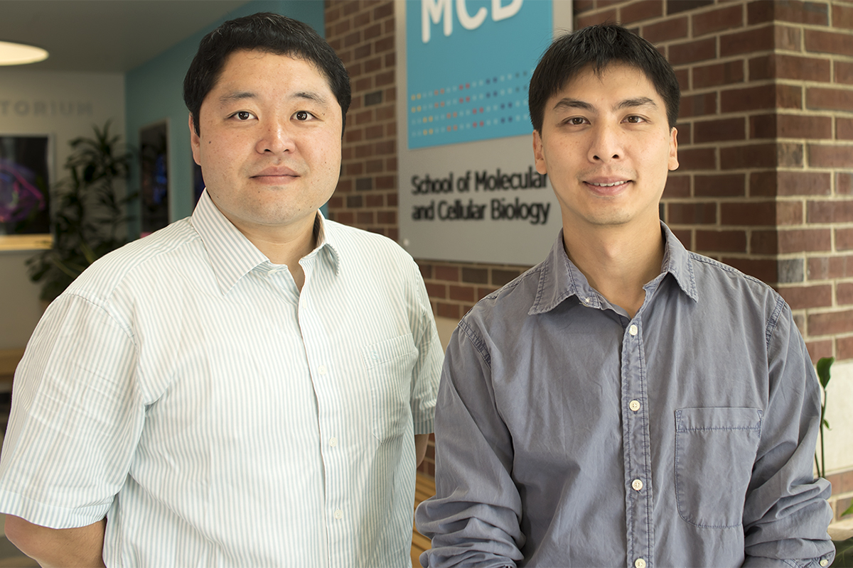 Researchers discovered that an overabundance of the tumor suppressor protein p53 in neurons can lead to impaired regulation of neuronal excitability in a mouse model of Fragile X syndrome.