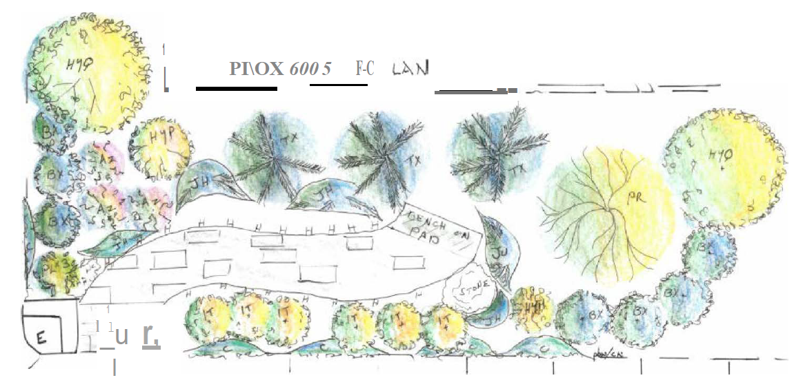 Design plans showing plants, a path and a bench.