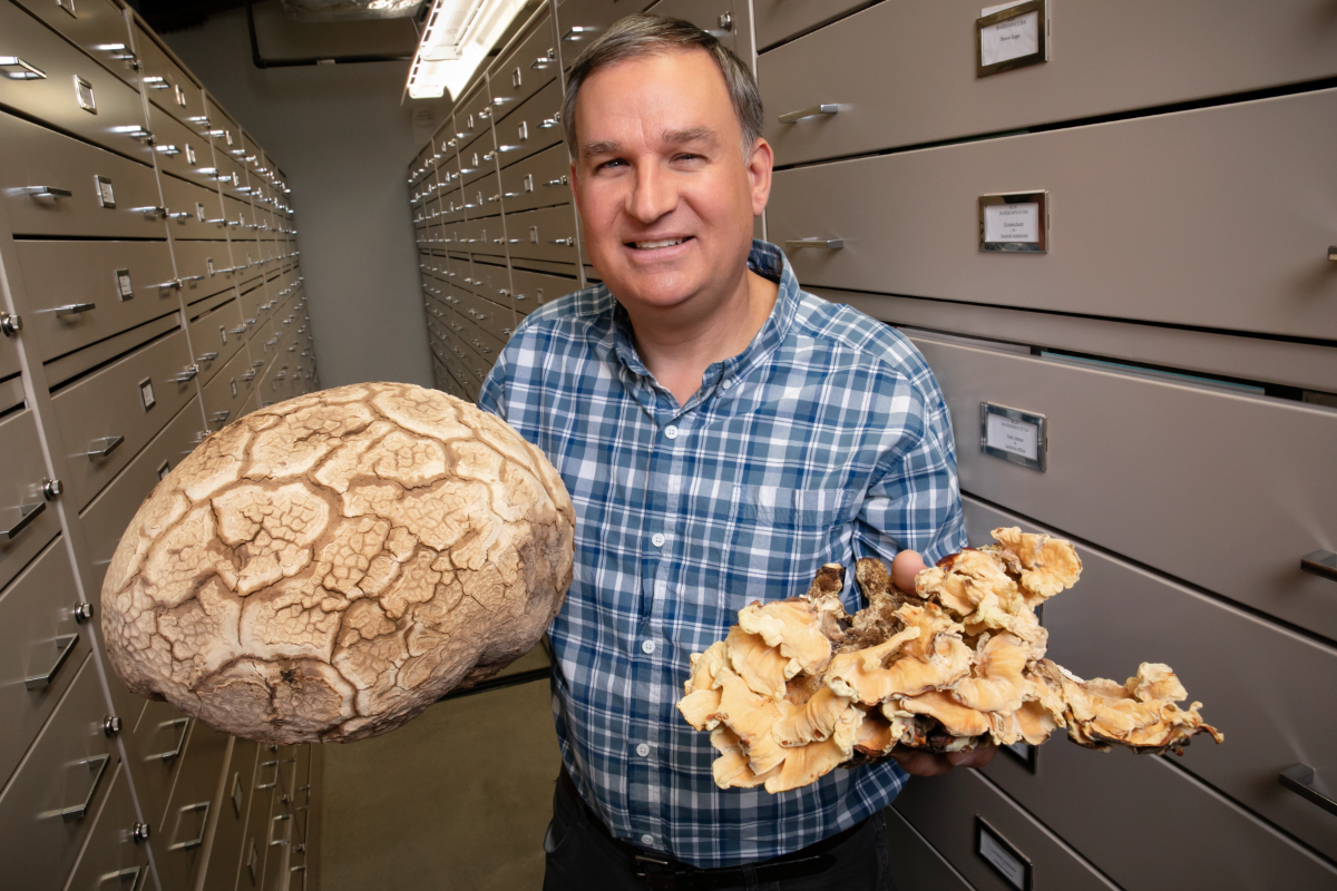 Andrew Miller and his colleagues created the first comprehensive checklist of North American fungi.