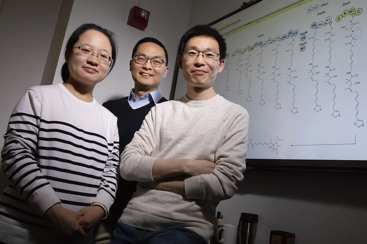 Illinois researchers developed a technique to unmute silent genes in Streptomyces bacteria using decoy DNA fragments to lure away repressors. Pictured, from left: postdoctoral researcher Fang Guo, professor Huimin Zhao and postdoctoral researcher Bin Wang