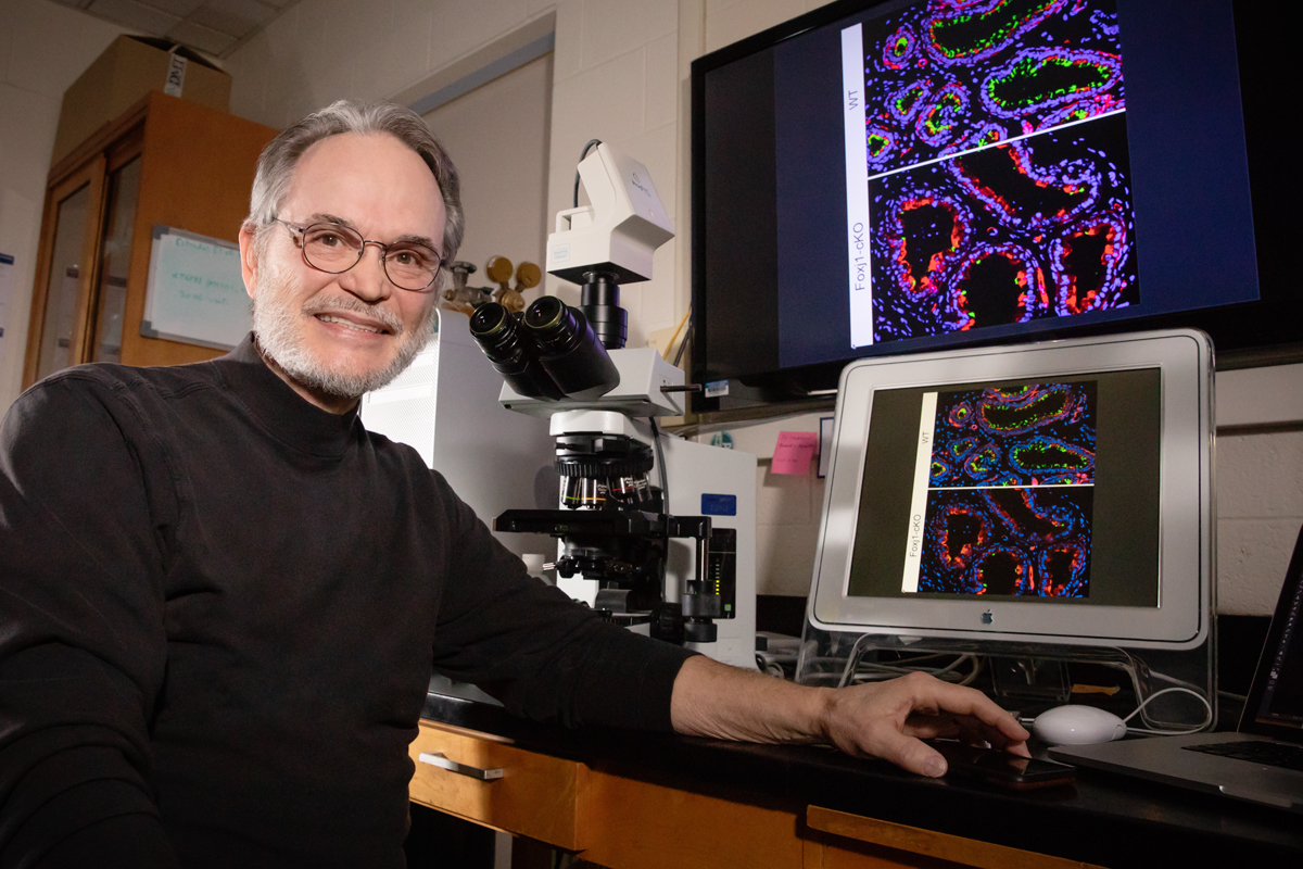 Cilia in the efferent ductules of the male reproductive tract don't transport sperm, as was previously thought, but agitate the fluid to keep the sperm from aggregating, new research indicates. Rex Hess was a co-author on the study.