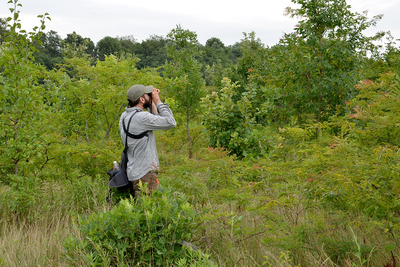 Illinois Natural History Survey avian ecologist Bryan Reiley looks for rare birds on conservation lands.